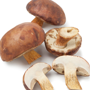 mushroom image